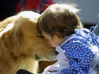 hoogsensitief kind en dier