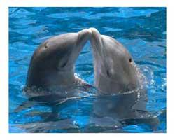 Wie zijn de dolfijnen?