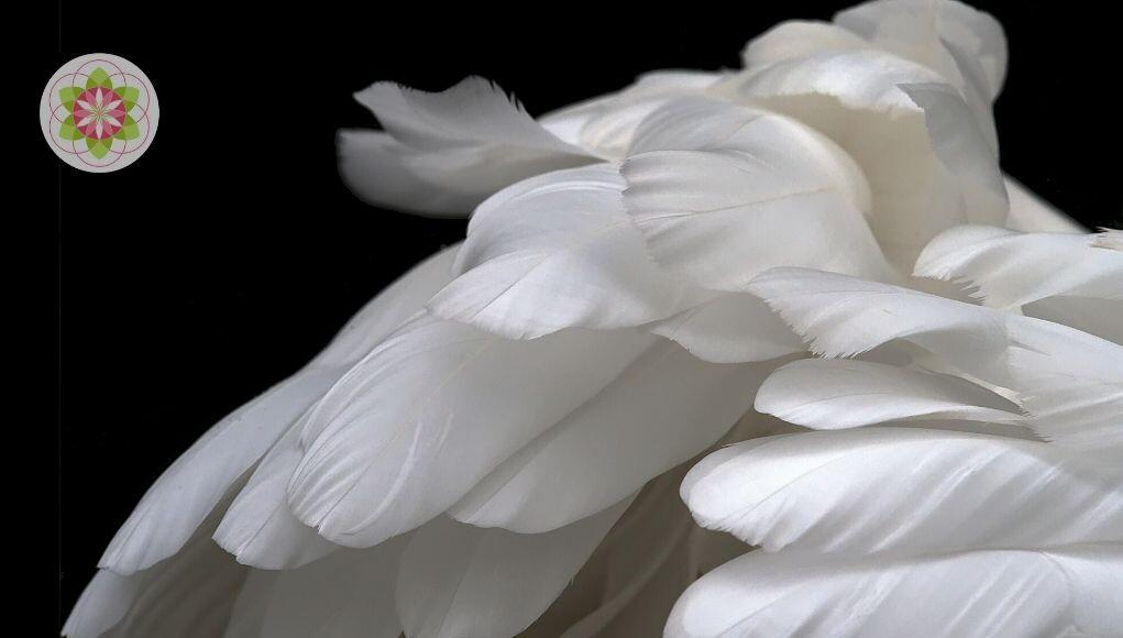 Ben Jij een Engel op aarde, geïncarneerde Elementaal of Sterremens?
