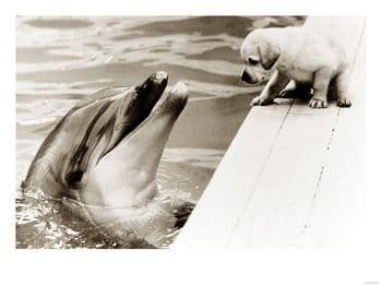 Dolfijn en pup