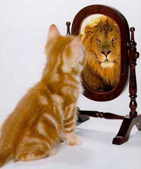 leeuw spiegel