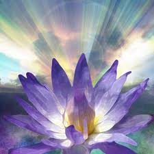 hart lotus