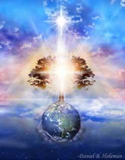 boom-van-licht