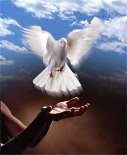duif-vrede