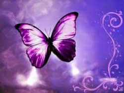 paarse-vlinder