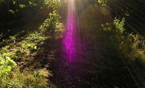 violette-vuur