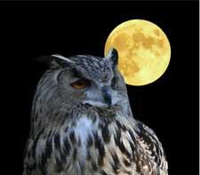 8-maart-volle-maan
