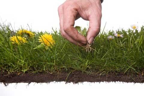 onkruid uit de tuin en planten