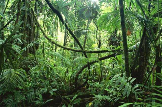Zingende Planten van Damanhur