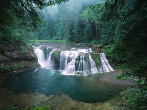 Gifford Pinchot Nationaal Bos, Washington, USA