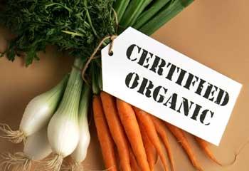 biologisch-voedsel