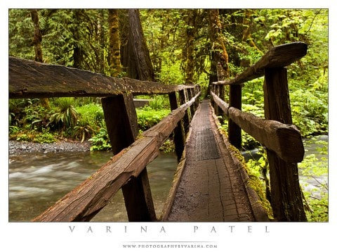 The Log Bridge - Varina Patel