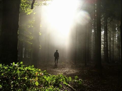 man-loopt-bos