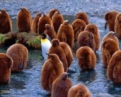 penguin staat alleen