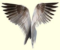 engel op aarde