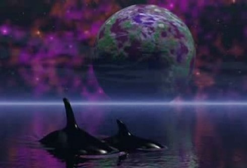 Starseeds-dolphins..