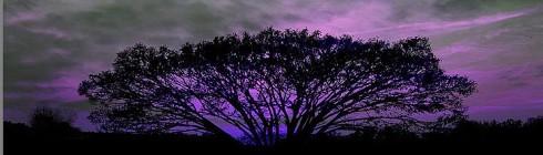 tree-of-life-sunset