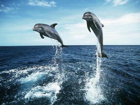 Nieuwetijdskind.com-dolfijnen