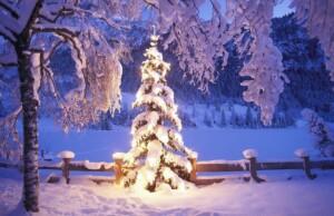 Nieuwetijdskind.com-kerstboom