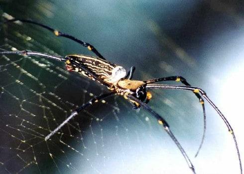 spin-verbinding
