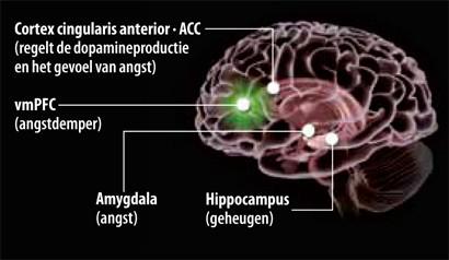Een posttraumatische stressstoornis (PTSS) wordt volgens de wetenschap veroorzaakt door een verkeerde geheugenwerking. Een wezenlijke eigenschap van het geheugen is dat het informatie kan vergeten die niet langer relevant is.