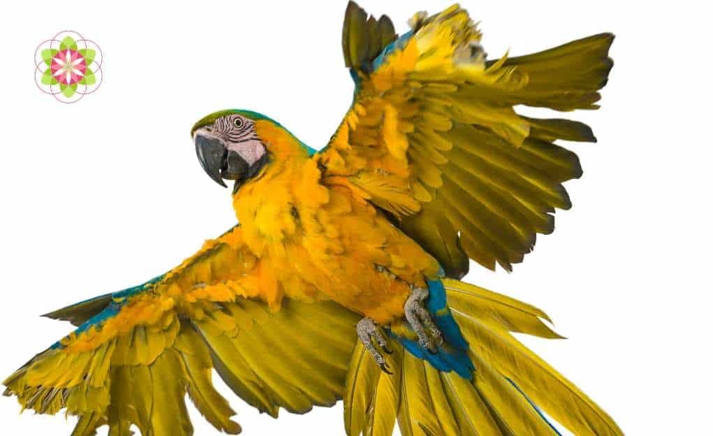 De spirituele betekenis van het dierenrijk op aarde (1)