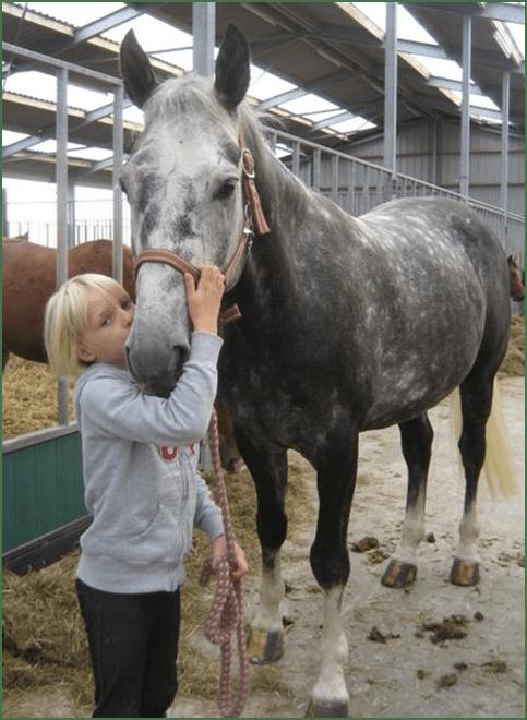 de helende kracht van een paard