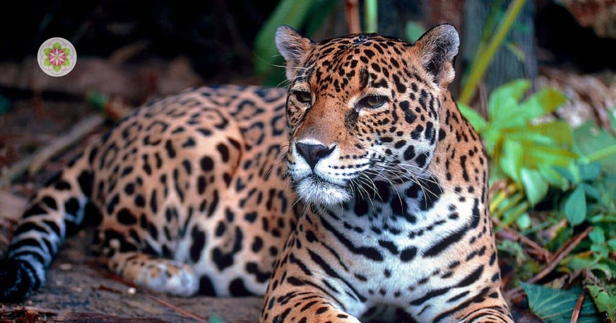 krachtdier jaguar