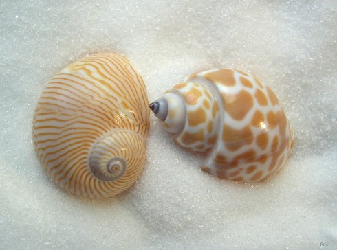 zeeschelpen-strand