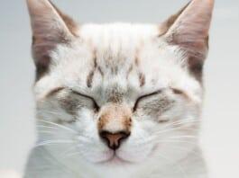 Kat als Zenmeester