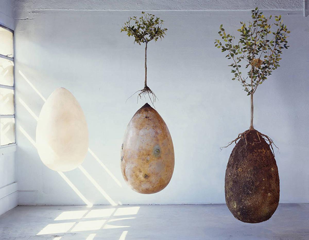 organische urn