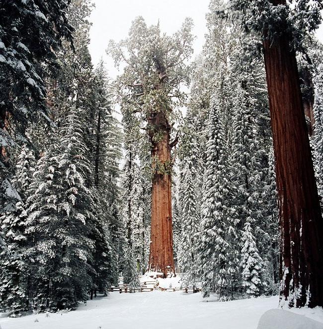 Sequoia-Natl-Park-Barry-Klein