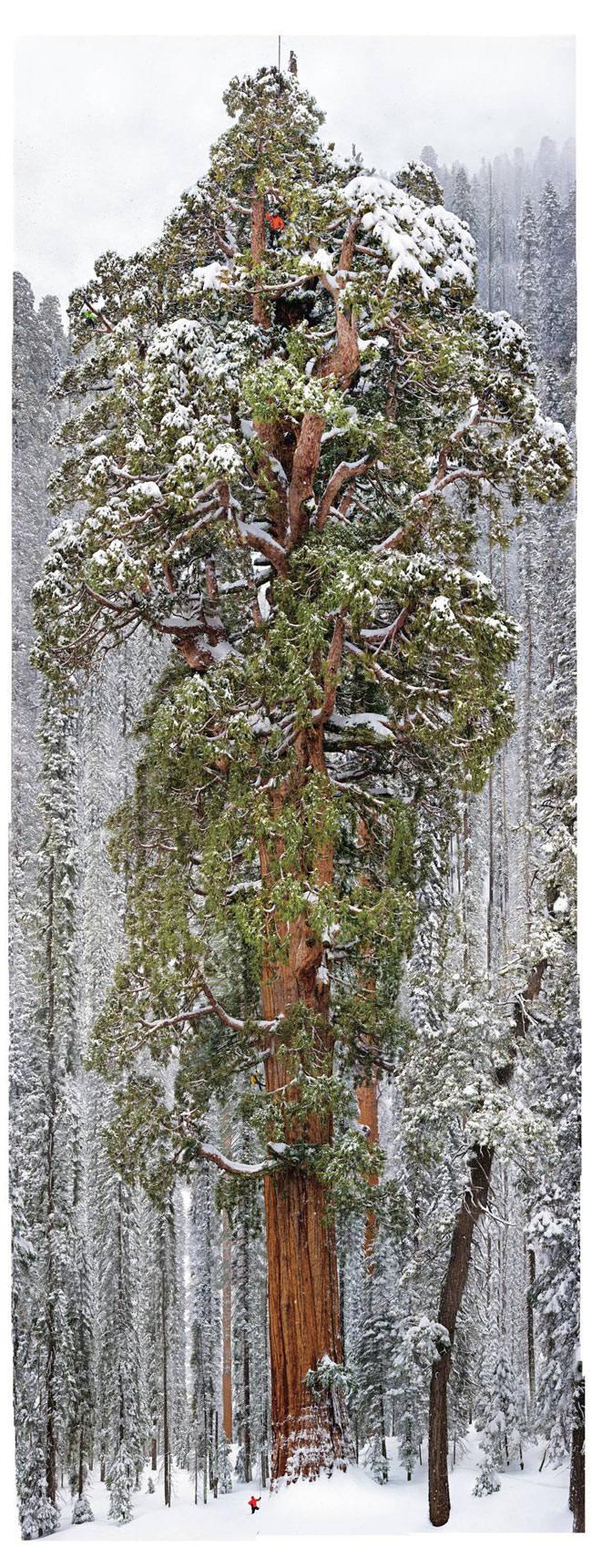 president-sequoia 6