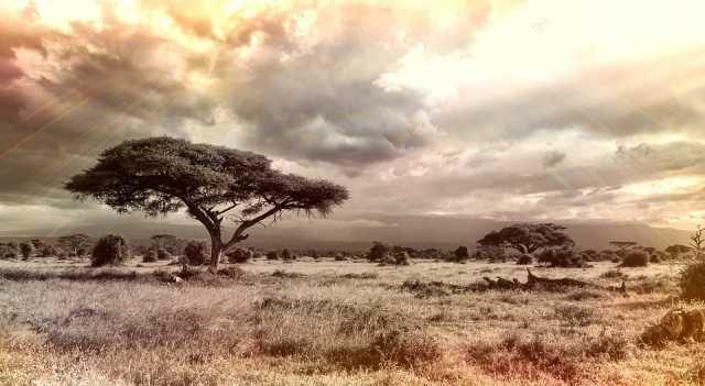 africa-savanne
