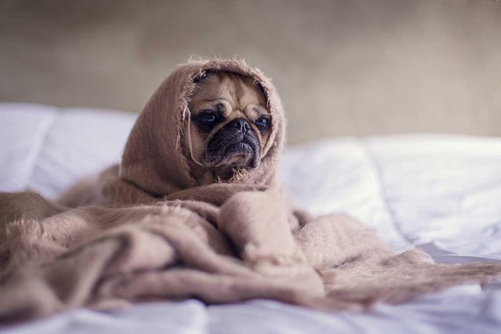 Hooggevoeligheid en Slaapproblemen: hoe kom ik hier vanaf?