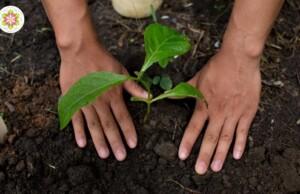 5 Manieren om te aarden