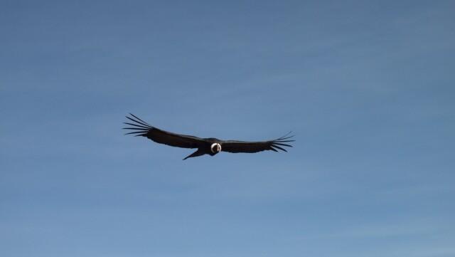 de gewijde ruimte - de condor