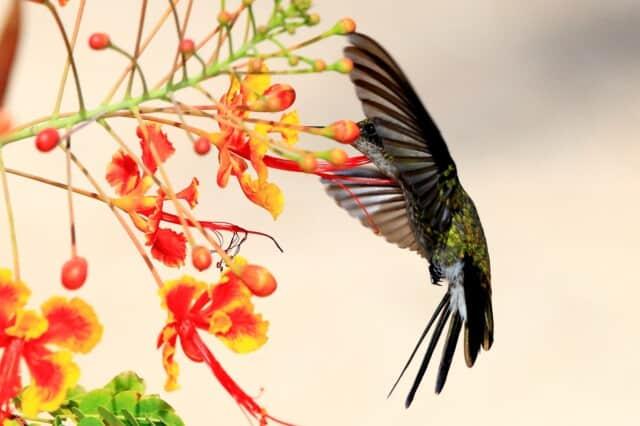 de gewijde ruimte - de kolibrie