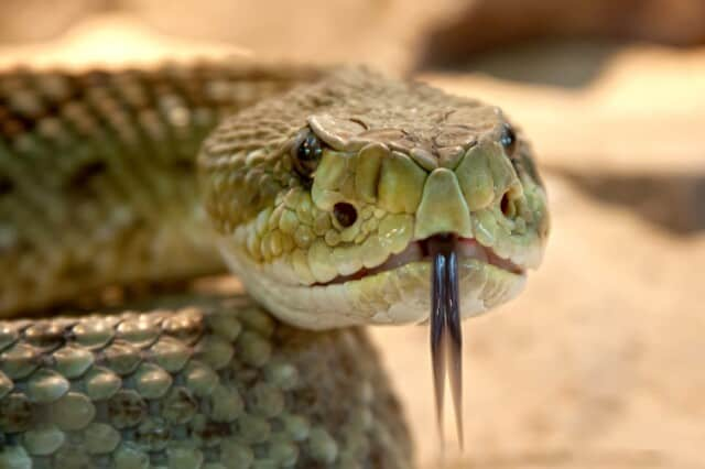 de gewijde ruimte - de slang