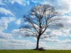 Bewustzijnsverandering--één-grote-paradox