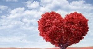 Kijk vanuit een ander perspectief en creëer je leven vanuit je hart!