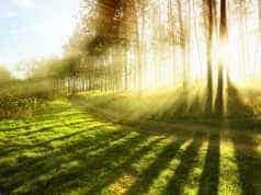 Artsen verklaren hoe onze hersens tijdens een boswandeling veranderen