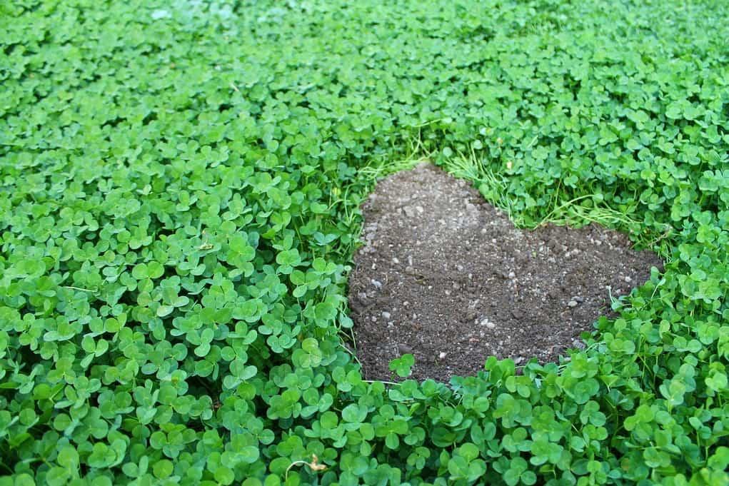 Hatun Karpay: een geopend hart in contact met de aarde