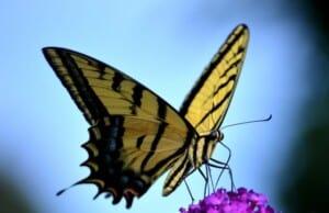 Naar een liefdevolle transformatie in vier eenvoudige stappen
