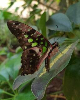 vlinder-toekomst