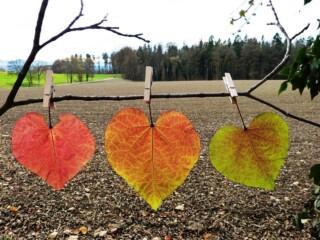 bladeren met wasknijpers aan een tak vast gemaakt
