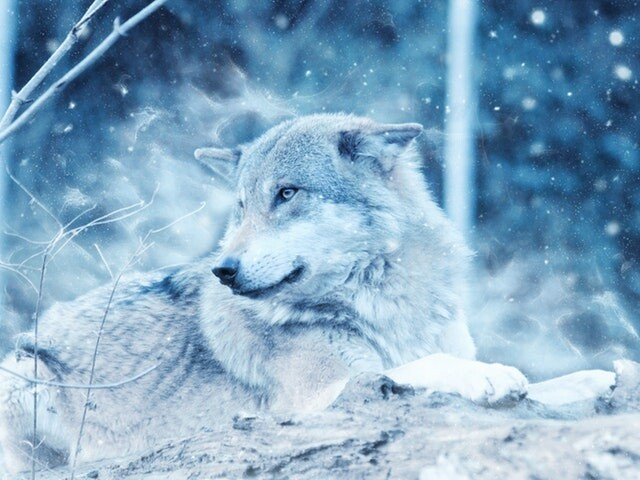 Berichten van totemdieren en spirituele gidsen