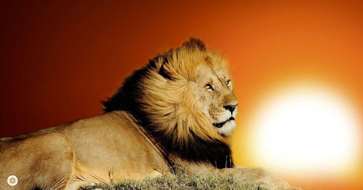 leeuwenpoort vuurkracht
