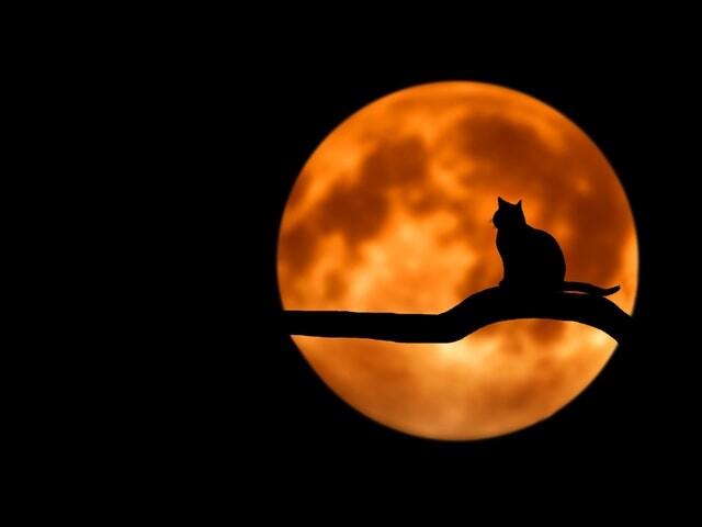 Volle maan in de comfortabele stier