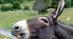Je moet een ezel zijn om lasten te dragen.